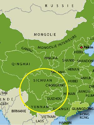 Les bambous non traçant viennet de Chine