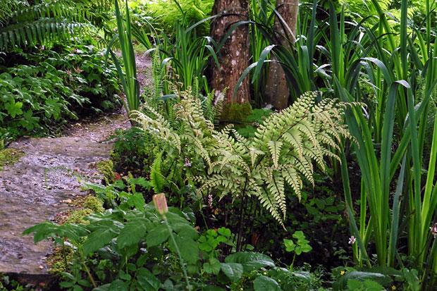 Les foug res plantes rustiques d 39 ombre par excellence for Conseil sur les plantes